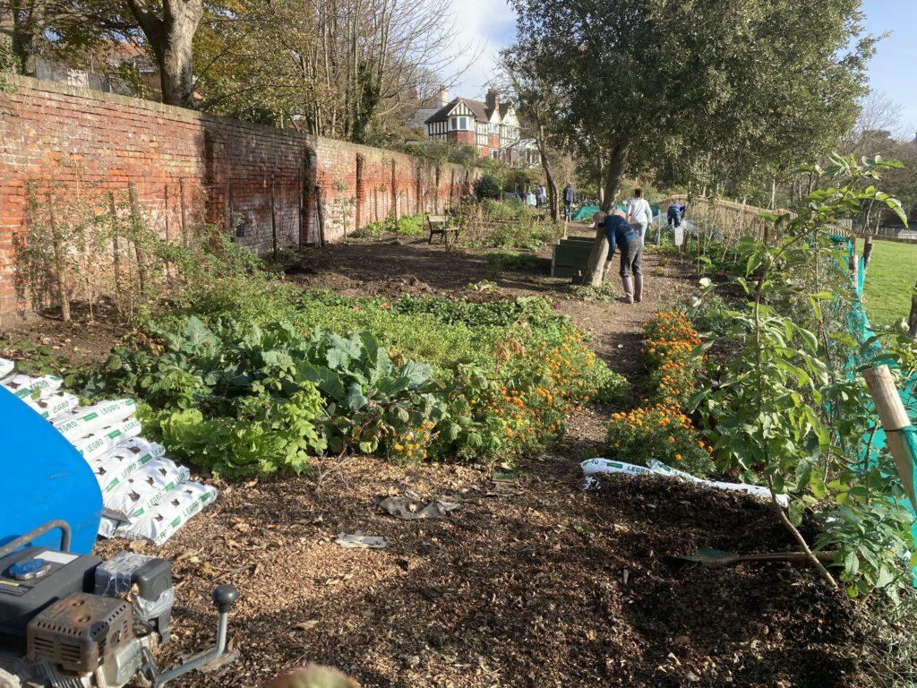 Sunny morning on Sandgate Community Garden