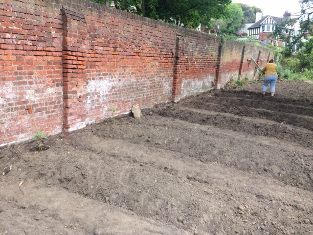 Mainly empty beds against garden wall